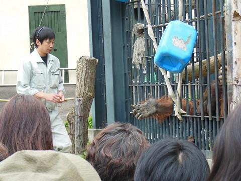 5月12日 旭山動物園 オランウータンのもぐもぐタイム