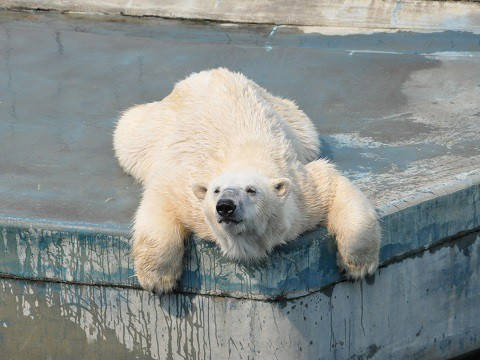 5月24日 釧路市動物園へ行ってきました。