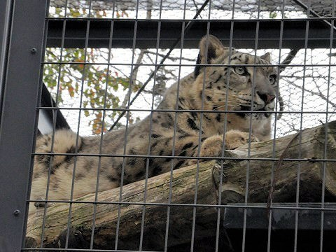 ちょっと前ですが・・・10月4日 円山動物園 アジアゾーン 寒帯館