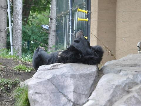 ちょっと前ですが・・・10月4日 円山動物園 アジアゾーン 高山館
