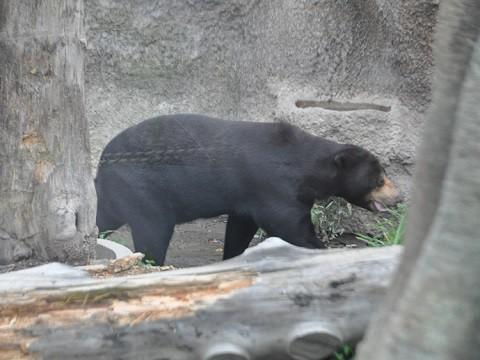 ちょっと前ですが・・・10月4日 円山動物園 アジアゾーン 熱帯雨林館