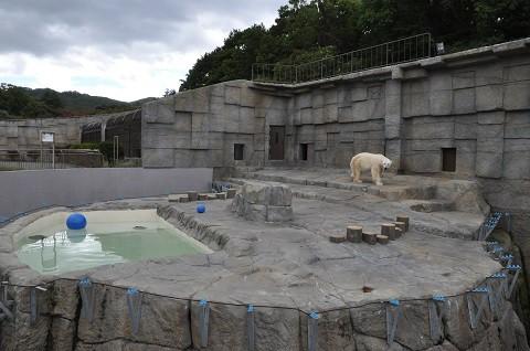 ちょっと前ですが・・・10月4日 円山動物園 ホッキョクグマ