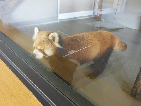 ちょっと前ですが・・・10月15日 円山動物園 アジアゾーン