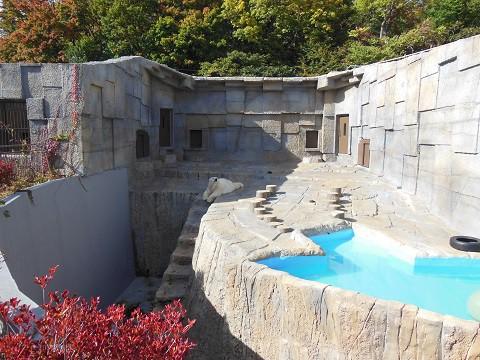 ちょっと前ですが・・・10月15日 円山動物園 ホッキョクグマたち