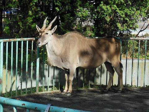 ちょっと前ですが・・・10月15日 円山動物園 熱帯動物館