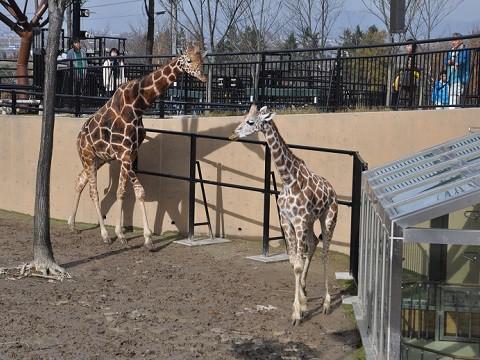 10月27日 旭山動物園へ行きました。