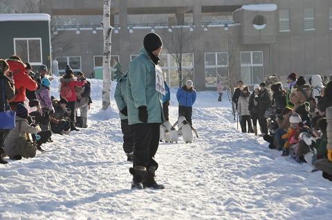 1月16日 旭山動物園 午後のペンギンの散歩