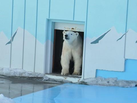 ちょっと懐かしい・・・2月18日 釧路市動物園 ミルク1