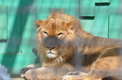 懐かしい写真・・・2月18日 釧路市動物園 猛獣舎の仲間達