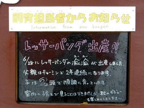 懐かしい写真・・・7月19日 旭山動物園 レッサーパンダ