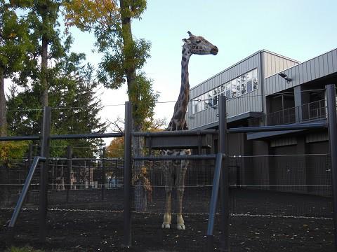 懐かしい写真・・・2016年10月 ちょっとだけ円山動物園へ
