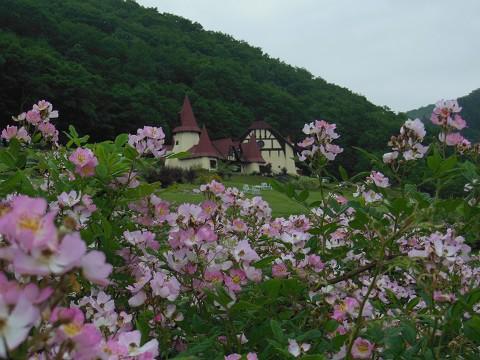 7月1日 滝上町 ハーブガーデン サクラバラフェアへ行ってきました。