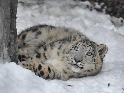 懐かしい写真・・・2016年12月3日 旭山動物園 もうじゅうたち