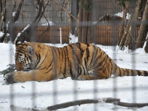 懐かしい写真・・・1月9日 旭山動物園 もうじゅう館のネコたち