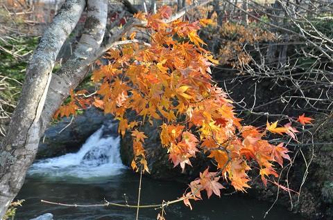 10月26日 滝上町 今日の渚滑川渓谷遊歩道2017・・・8 最終回