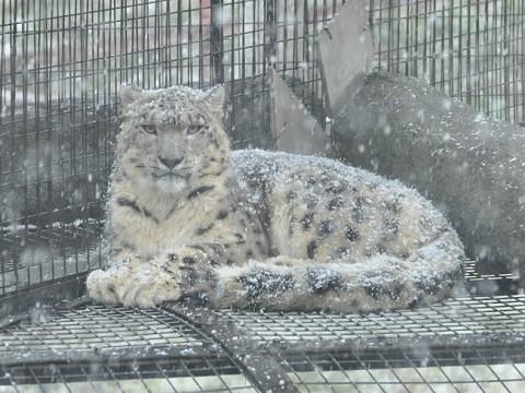 11月15日 旭山動物園へ行ってきました