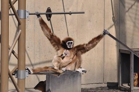 懐かしい写真・・・4月2日 旭山動物園 いろんな親子