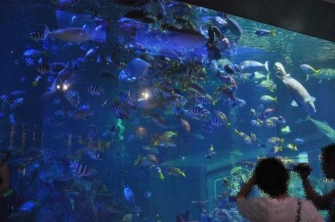 2017年8月 道外旅行3日目・・・飼育種類数日本一の水族館