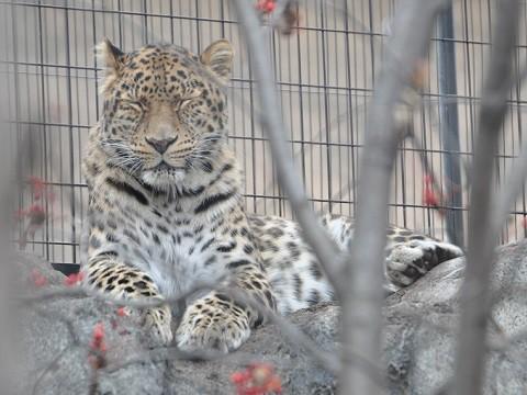 懐かしい写真・・・2017年11月3日 旭山動物園 もうじゅうたち