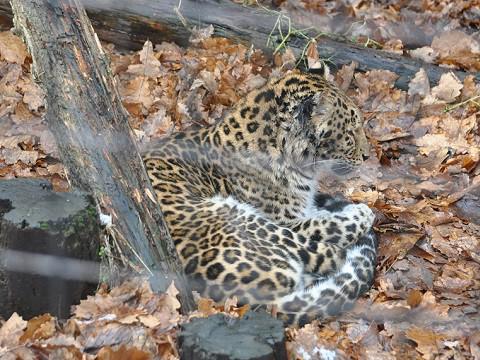 懐かしい写真・・・2017年11月15日 旭山動物園 もうじゅう館