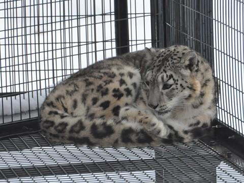 懐かしい写真・・・2月10日 旭山動物園 夕方のもうじゅう館