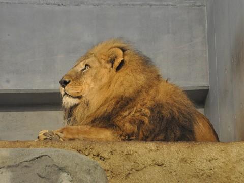 ちょっと懐かしい写真・・・4月7日 円山動物園 アフリカゾーン