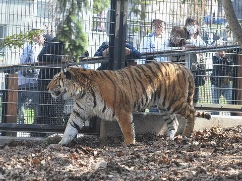 ちょっと懐かしい写真・・・4月29日 旭山動物園 もうじゅう館