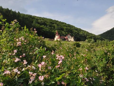 6月23日 滝上町 香りの里ハーブガーデンへ行ってきました。