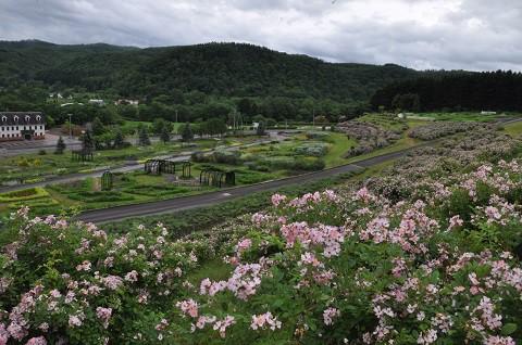 7月1日 滝上町 香りの里ハーブガーデン サクラバラフェアでした。