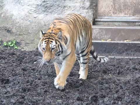 懐かしい写真・・・7月12日 旭山動物園 もうじゅう館の仲間達