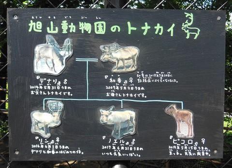 (動画追加)懐かしい写真・・・2018年7月24日 旭山動物園 トナカイ