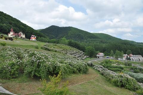 6月30日 滝上町 ハーブガーデン サクラバラフェア開催されました