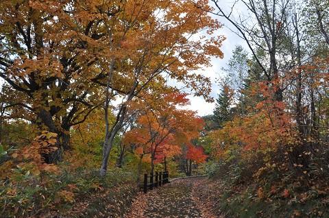 10月20日 滝上町 今日の渚滑川渓谷遊歩道錦仙峡・・・4