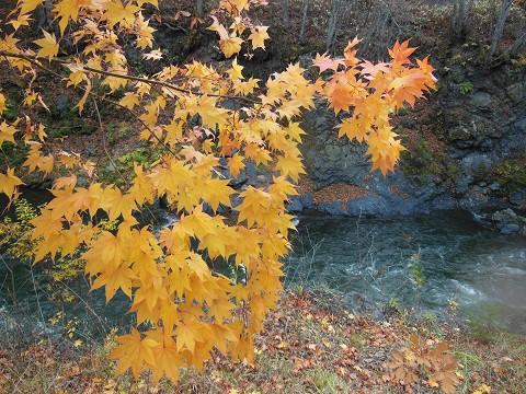 10月26日 滝上町 今日の渚滑川渓谷遊歩道錦仙峡・・・5