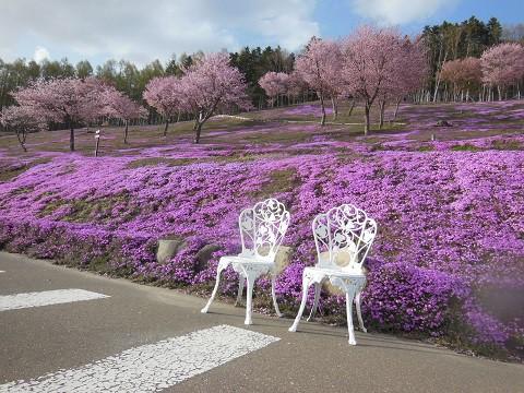 5月8日 滝上町 今日の芝ざくら滝上公園2021・・・2