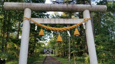伏古神社にて・・クローバーの力強さにびっくり~