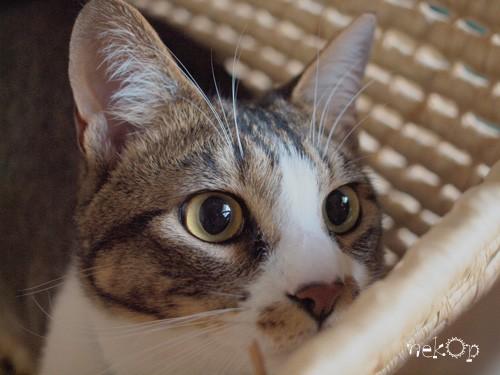 猫の夏合宿 三日目