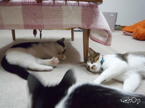 猫の夏合宿 四日目