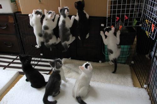 Wish 里親募集中の子猫ちゃんたち