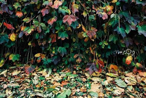 道カメ「秋の紅葉」フォトコン投票期間中
