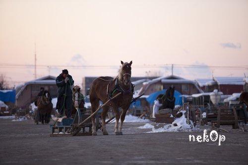 馬と初日の出