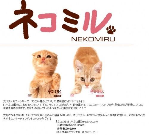 ≪猫の日≫