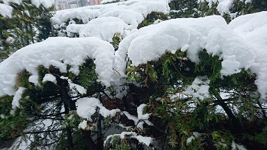 雪降ったぁ!!ですね