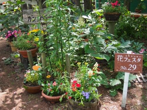 夏の観光シーズンです。「第14回中札内花フェスタ」が始まりました。
