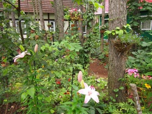 「中札内花フェスタ」開催中~8/10まで、ユリも咲き始めました。