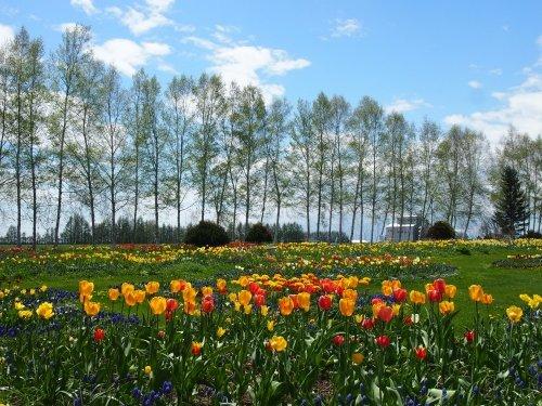 北海道ガーデン街道を訪ねて(2)チューリップ咲く「紫竹ガーデン」