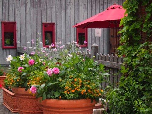北海道ガーデン街道を訪ねて(3)初夏の花咲く「上野ファーム」