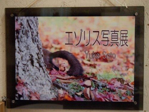 「えぞりす写真展~SatoYuka~」リニューアルしました。