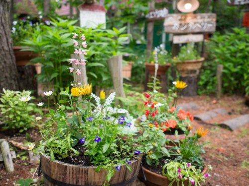 2週間続いた長雨も終わり・・夏の庭(花壇)づくり始めました。