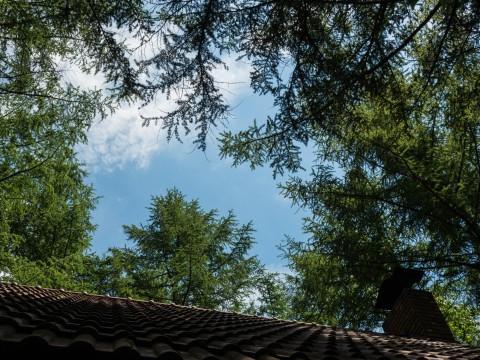 梅雨明け?約3週間振り・・カラマツ林の間から「青空と太陽」